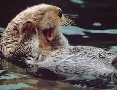 【癒しトピ】動物のあくびしてる画像集めよう