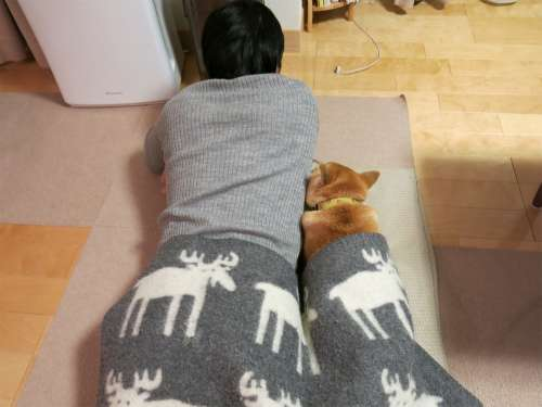 ペット 一緒に寝てますか?
