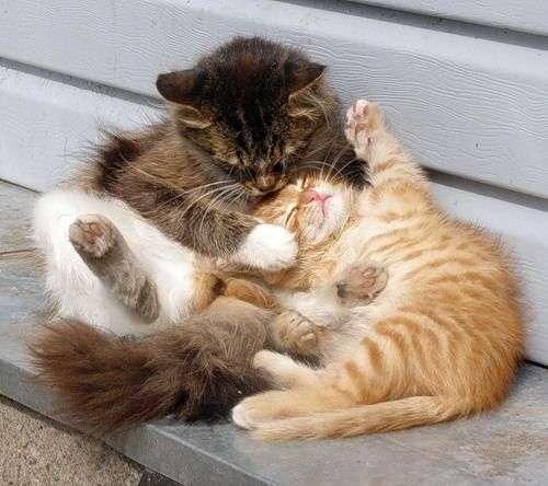 疲れたあなたへ。赤ちゃん動物たちの愛くるしい写真の癒し効果がすごすぎると話題に