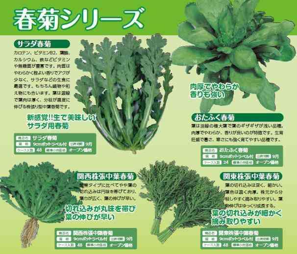 春菊の料理法