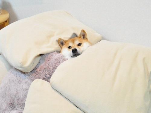 少しでも癒されたら寝るトピ