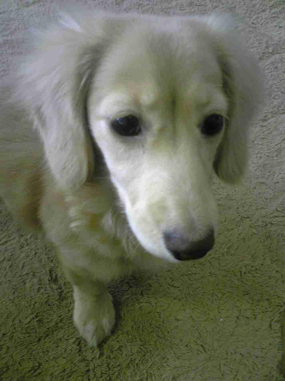 犬の画像を貼るトピฅ´・ᴥ・`ฅ