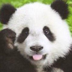 パンダの画像を貼るトピ