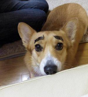眉ティント使ったことありますか