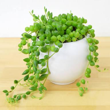 観葉植物好きな人~!!