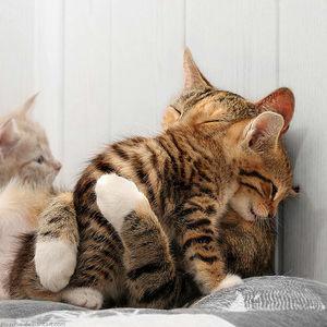 今抱きしめられたい、人肌恋しい人!