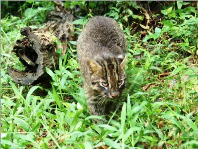 絶滅危惧種の動物の画像を貼るトピ