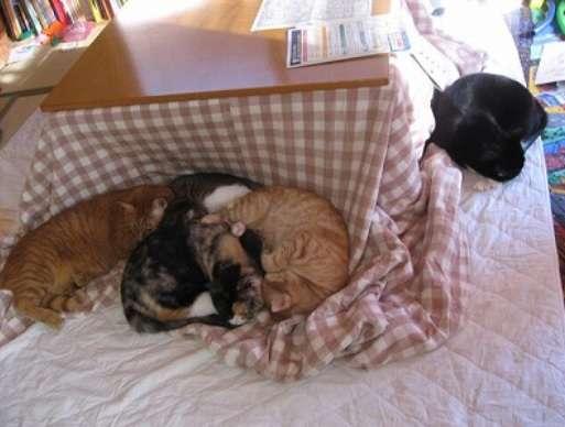 猫とこたつに入っている人あるある