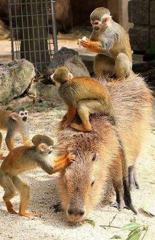 動物園で好きな動物は