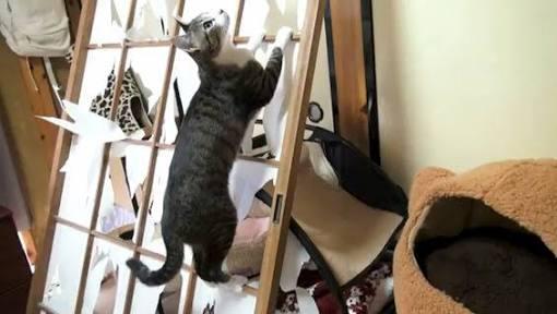 猫を飼うときの覚悟