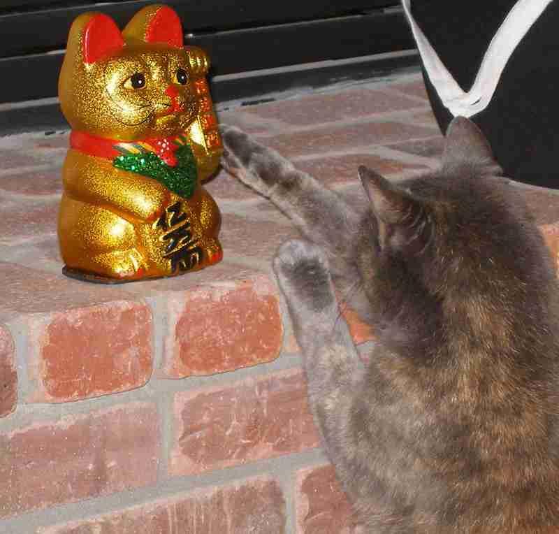 招き猫に願いを