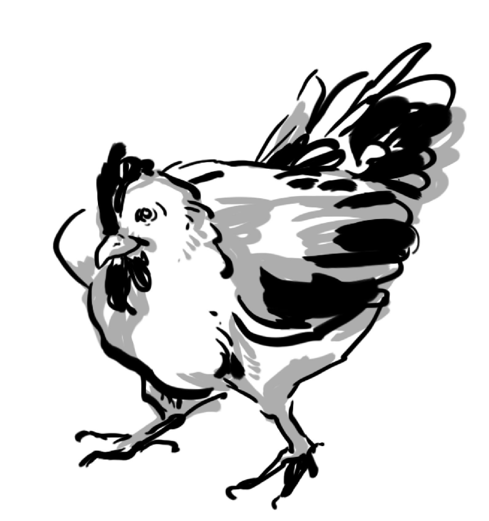 記憶を頼りに鶏を描こう!