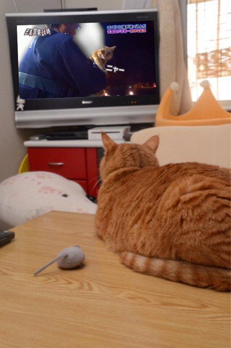 猫の面白可愛いGIF動画が集まるトピ(ΦωΦ)
