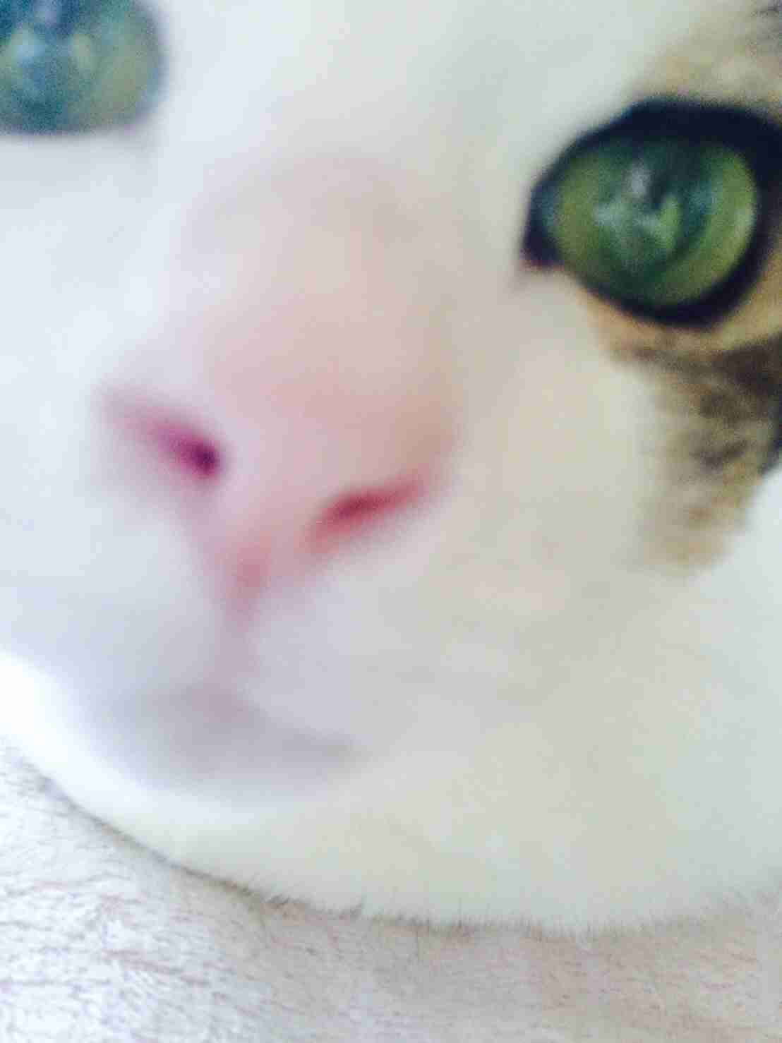 【画像】動物の顔面ドアップ