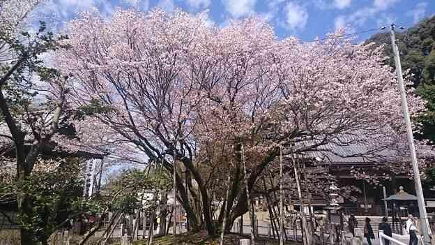我が地元の日本一♪