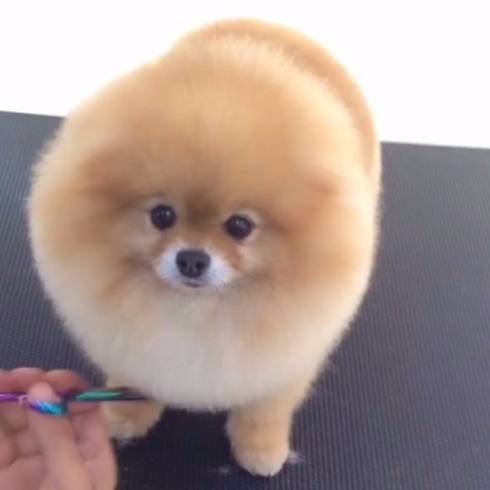 まぁるい生き物で癒されたいトピ