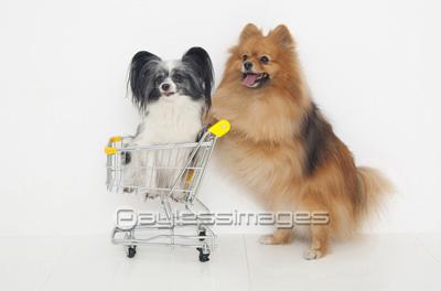 スーパーで買い物するとき、カートを使う派ですか?