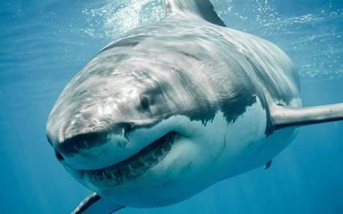 サメ映画について語ろう!