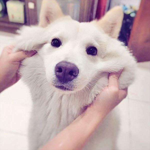 『画像』ミックス犬が見たい