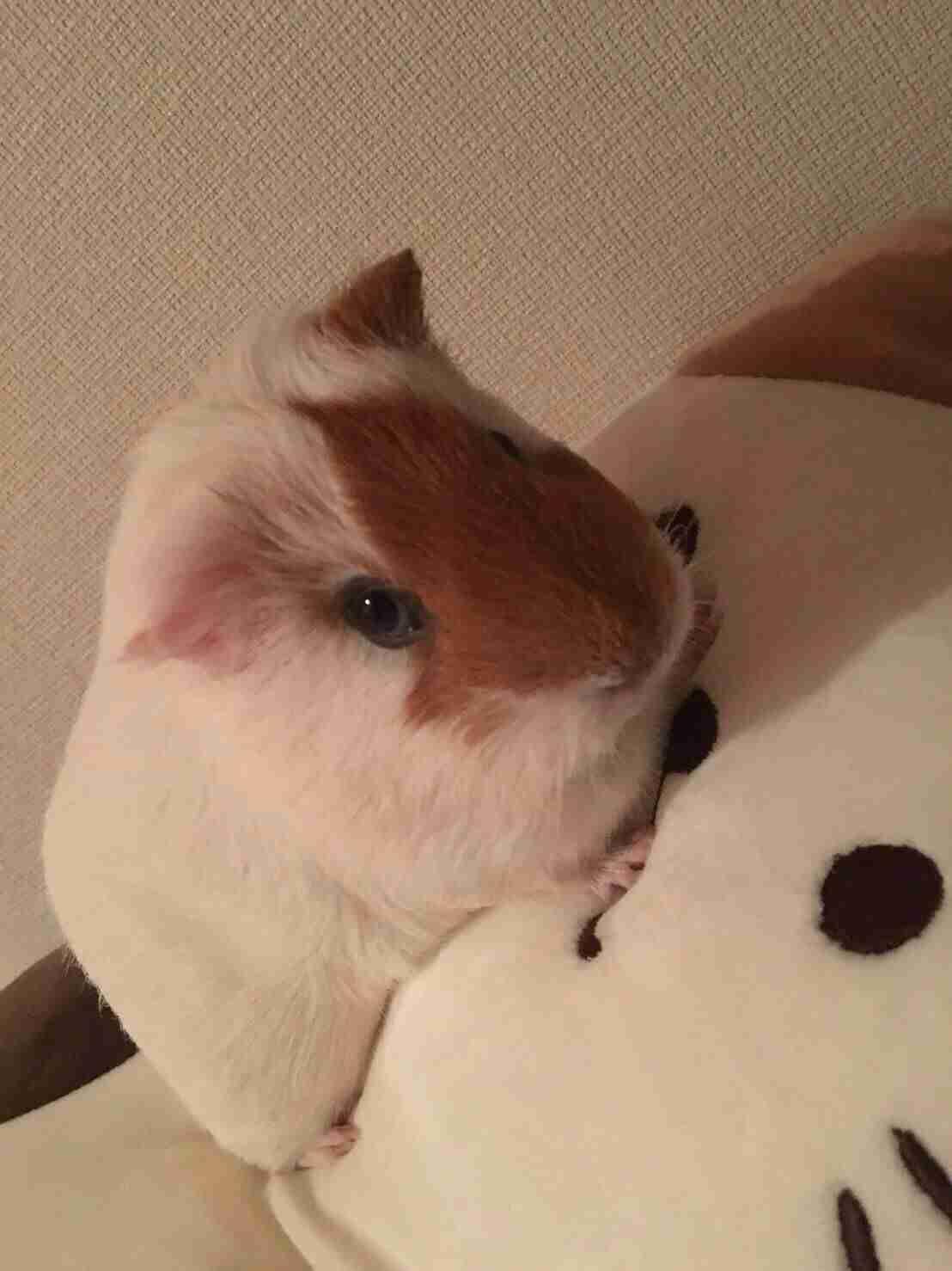 【ペット・動物】イケメンな写真・エピソード募集!