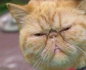 有村架純のタヌキ顔が負けた!「モテる動物顔」1位はカトパン的な…