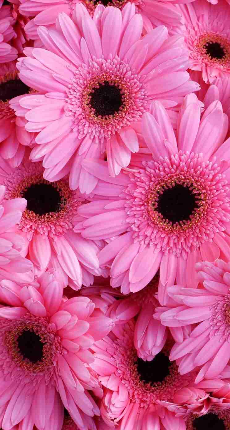 かわいい!ピンクの画像