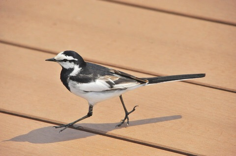 鳥が好きな方、集合ー!