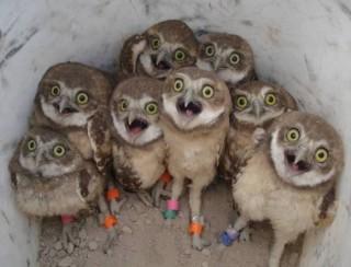 【閲覧注意?】羽のない「フクロウ」ってどんな姿?あまりにも衝撃的な結果にネットが騒つく