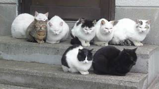 ガルちゃん猫カフェ11号店オープンしました!(はじめての方も大歓迎!)