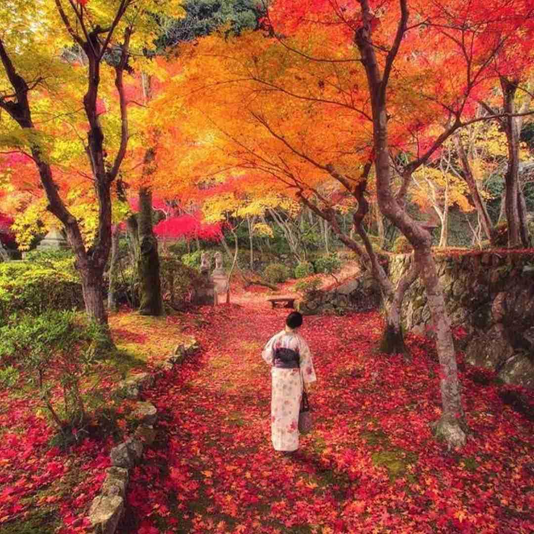 粋な和風の画像が集まるトピ
