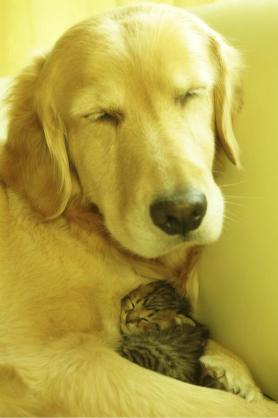 仲良しな動物達の画像