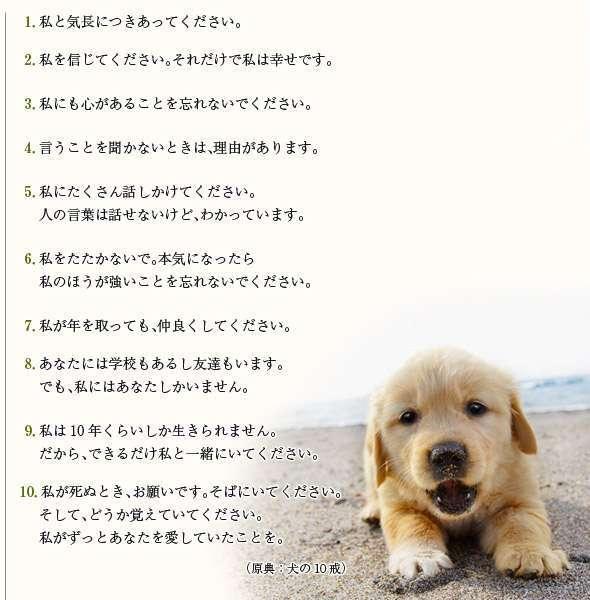 犬を飼う時の覚悟