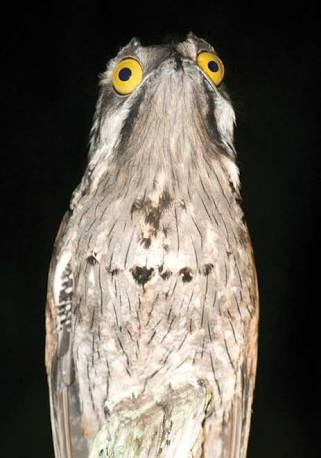 【閲覧注意】「目の前にポケモンに出てきそうな鳥がいた…」南米ベネズエラで撮影された写真