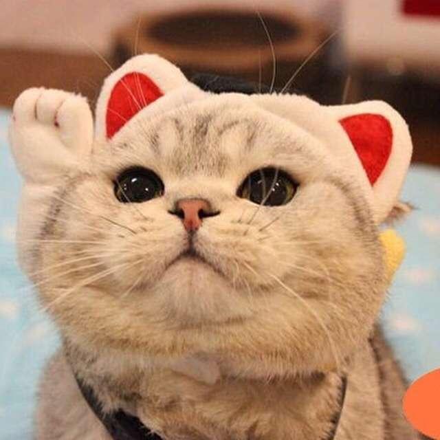 猫グッズで溢れるトピ