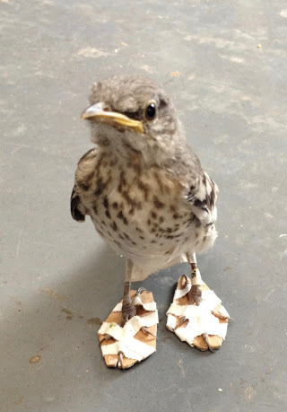 ホッとするね!鉄パイプに足が凍りついた小鳥、救出される(米)