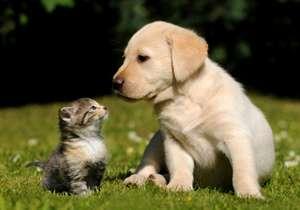 犬猫の殺処分を無くすにはどうしたらいいと思いますか?