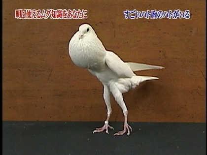 巨乳と勘違いされる鳩胸いますか?