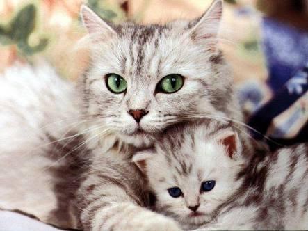 母親になるということは○○ということ。