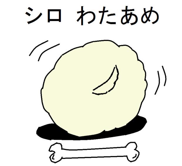 マルチーズの可愛さを分かってほしい!