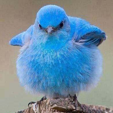 ドラマ「青い鳥」を語ろう!