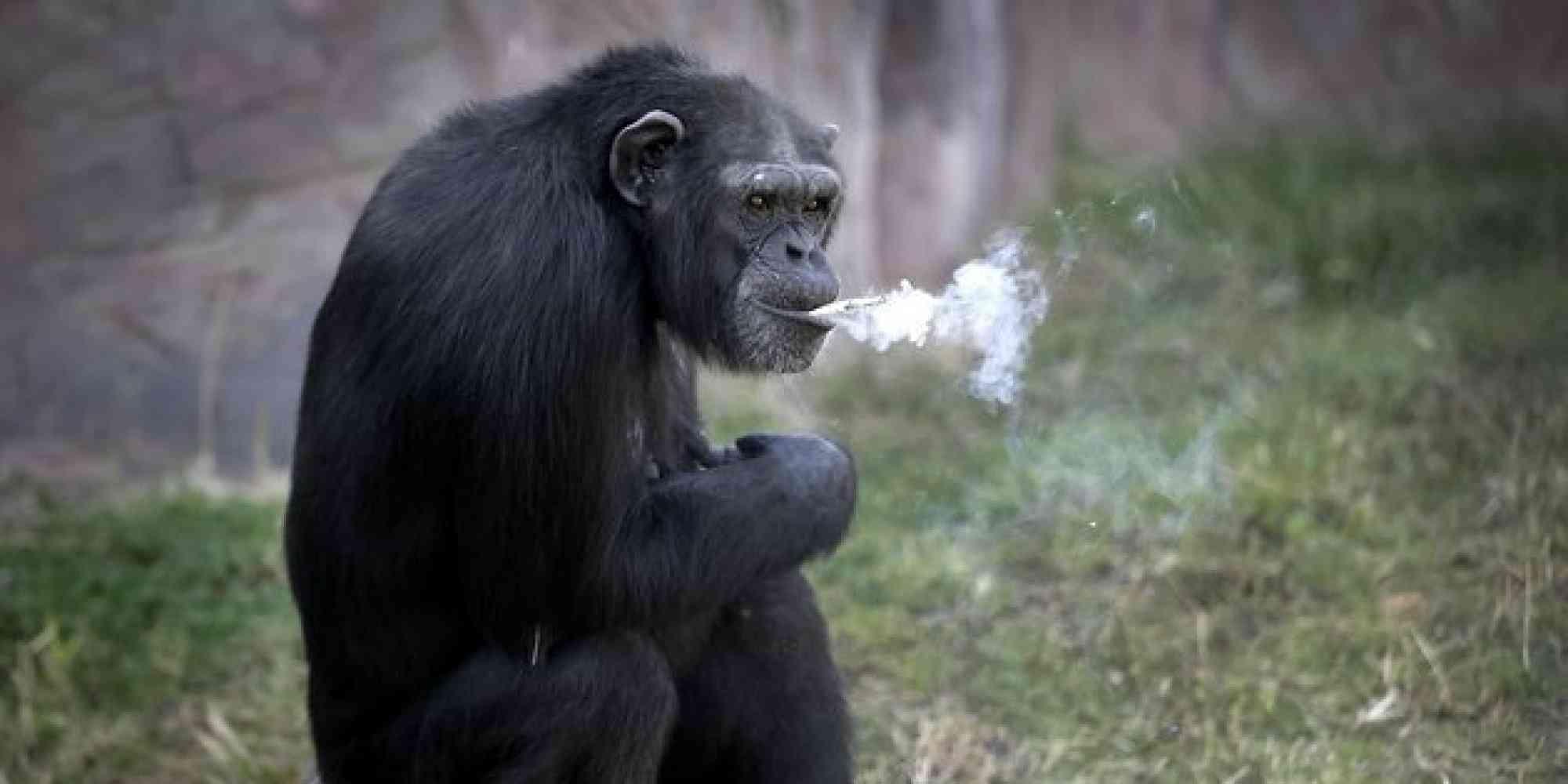 たばこを吸う理由の1位は? - 2位は「イライラするから」