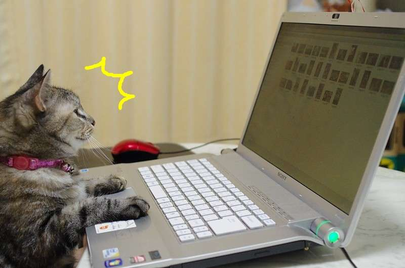 ガルちゃん猫カフェ12号店♪開店しました (初めての方も大歓迎!)