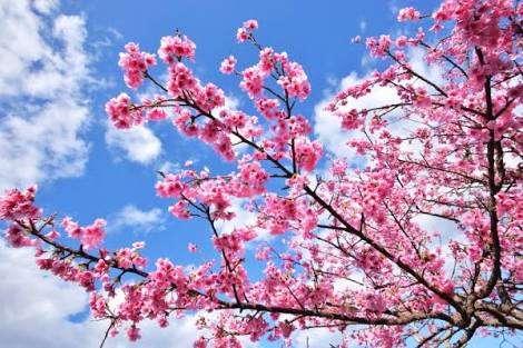 春の足音を感じる時…