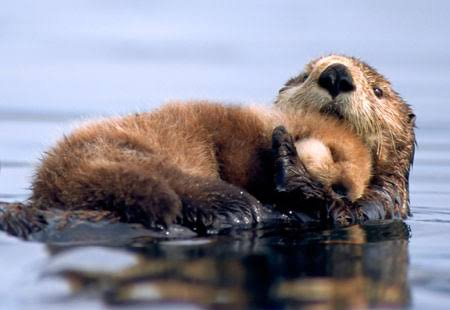 動物の赤ちゃんの画像で和みましょう