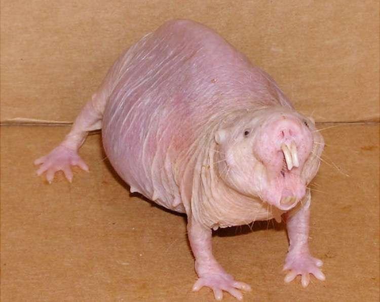 珍しい動物の画像を貼って紹介するトピ