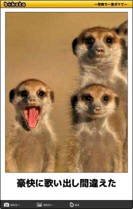 今のあなたに似た動物画像を貼ってください