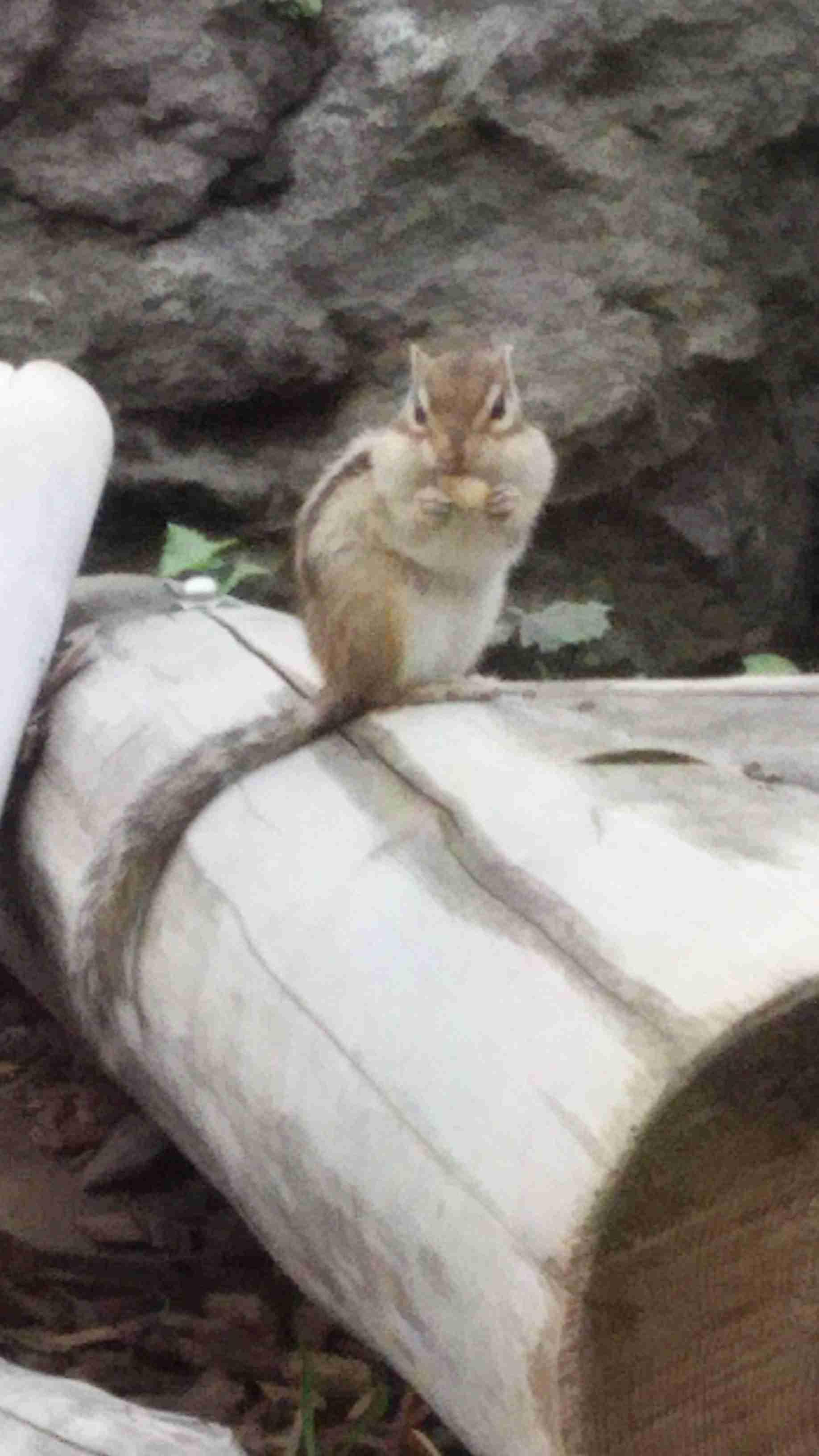 【画像】リスが集まるトピ【メルヘン】