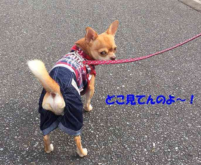 ペットショップの犬猫を撮影すること