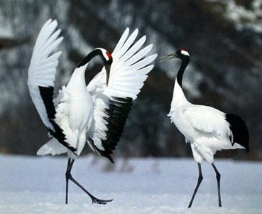 日本の野鳥の画像を貼るトピ
