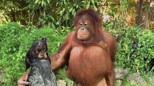 動物でキャバクラを作るトピ